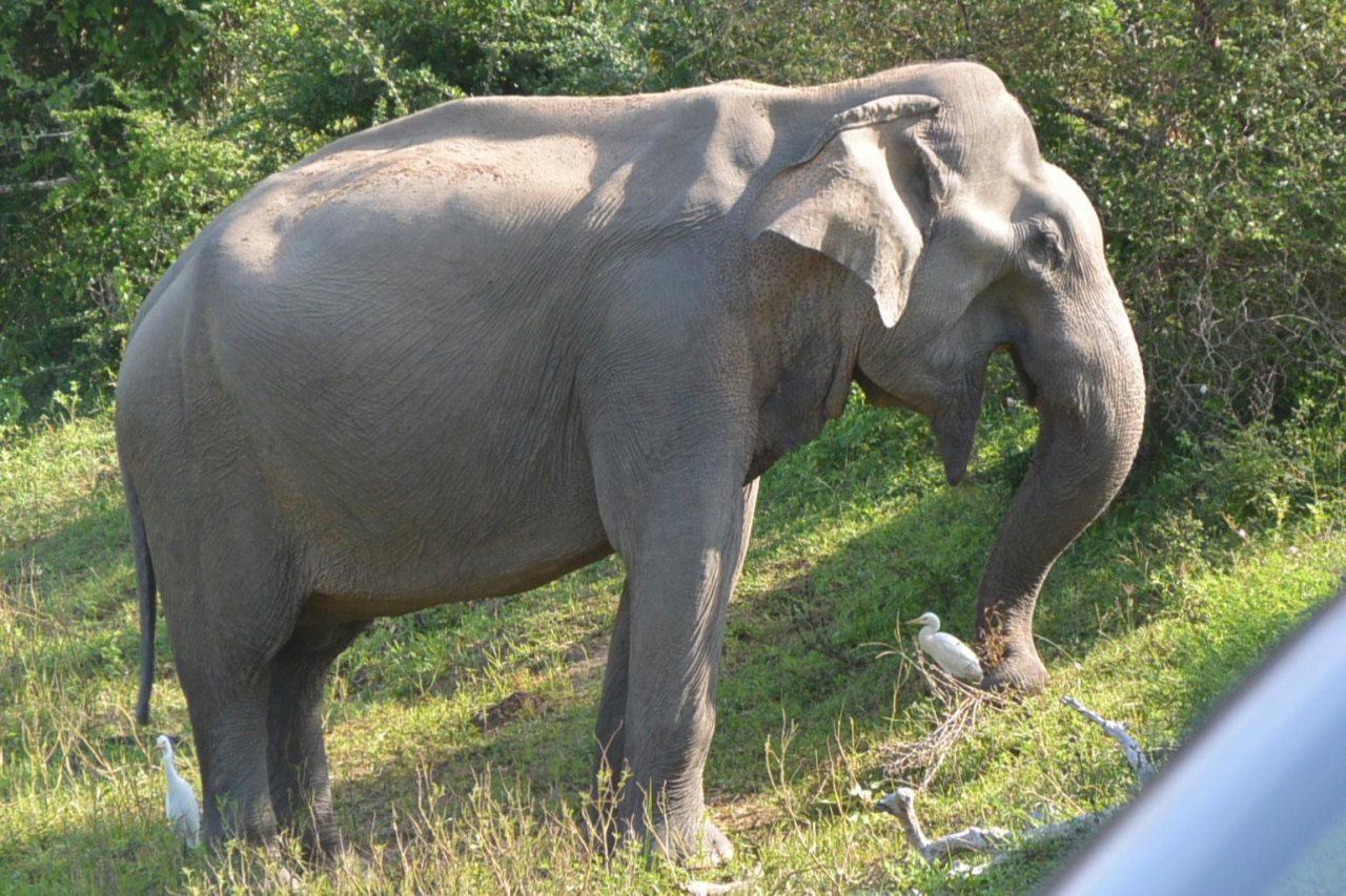 ヤーラ国立公園の象-4