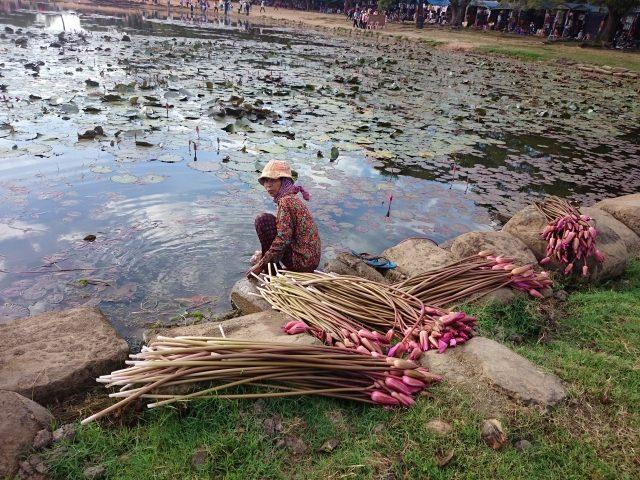 アンコールワット-蓮の花を刈る女性